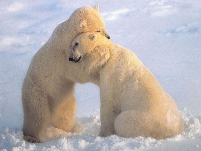 Bear_Hugs_After_Long_Separation_Wallpaper_gelnz